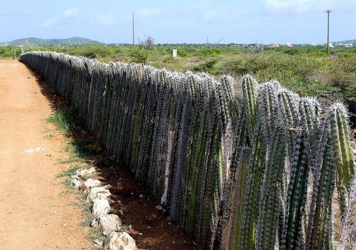 Cactus Fence.jpg