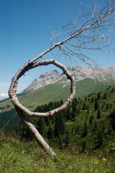 Circular Tree.jpg