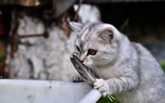 Feather Cat.jpg