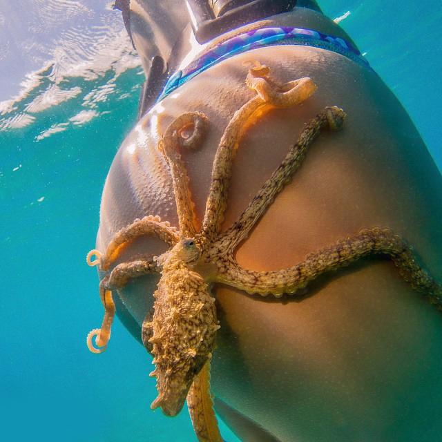 octopus on a butt.jpg