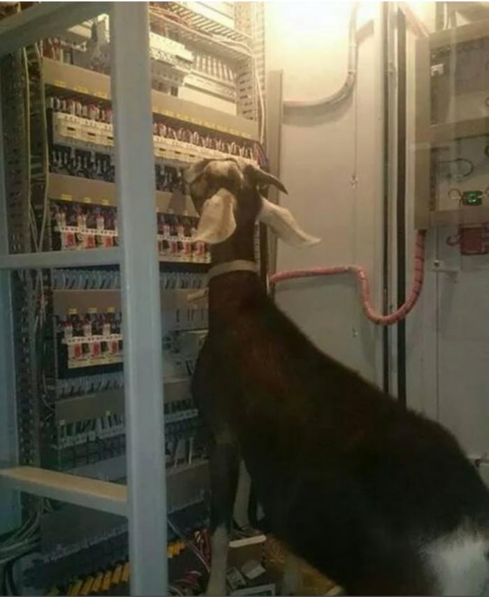 Goat Network Admin.png