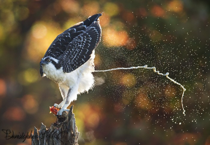 bird-poop-is-a-thing-of-beauty