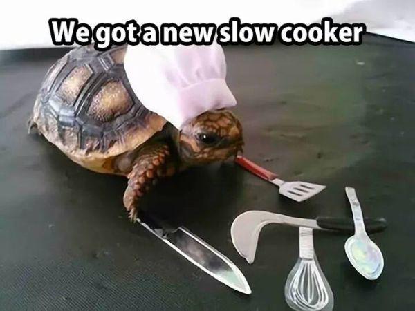 we got a new slow cooker.jpg