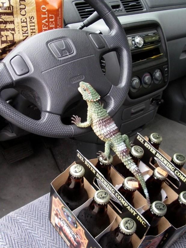 Gecko Driver.jpg