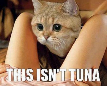 This isn't tuna.png