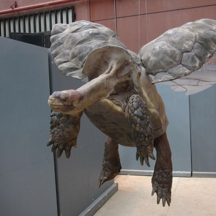 flying turtle.jpg