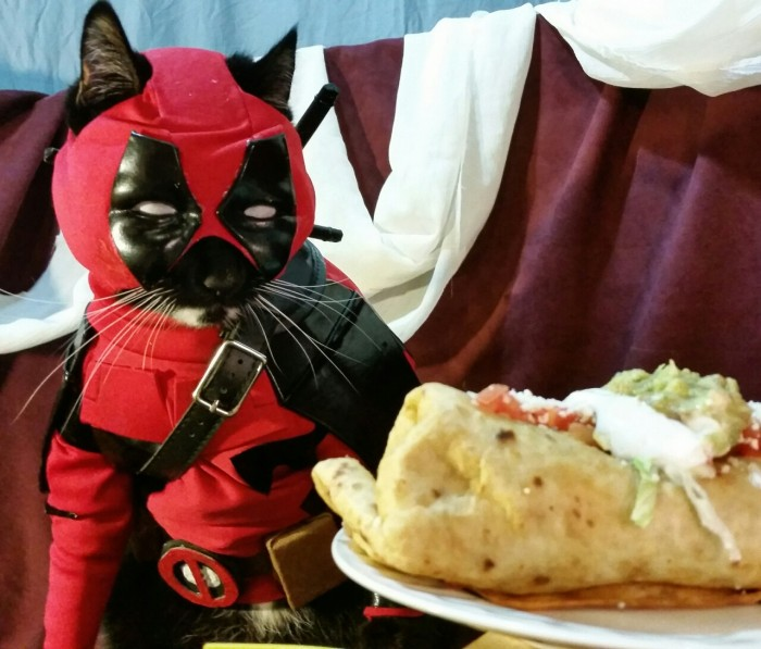 Catpool Deadpool Cosplay 001 700x597 Deadpool Cat