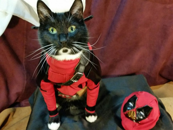 Catpool Deadpool Cosplay 003 700x525 Deadpool Cat