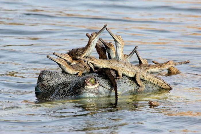 Croc Taxi.jpg