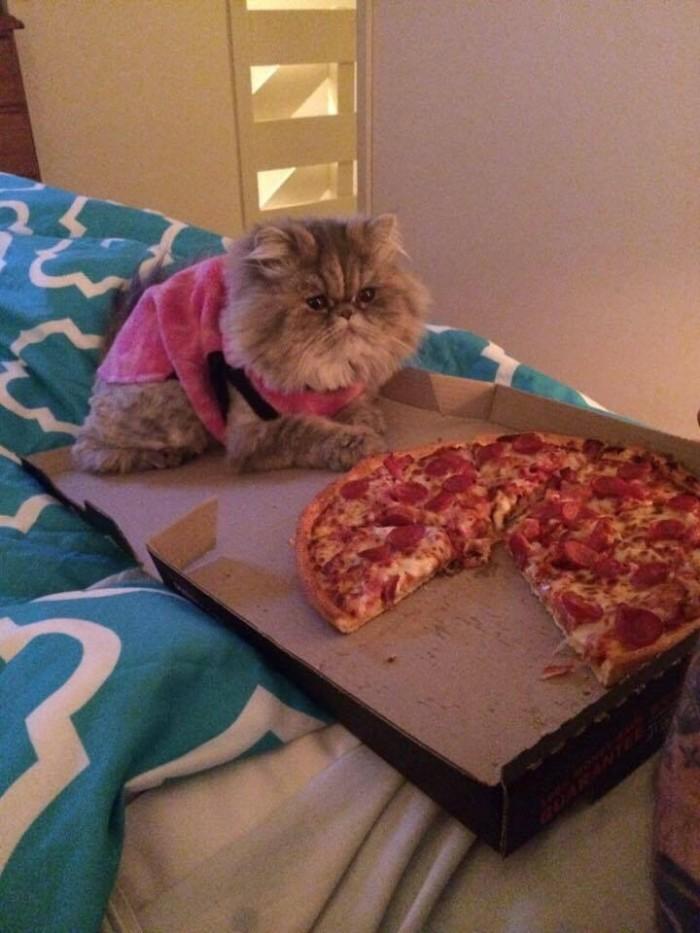 a cat vs pizza.jpg
