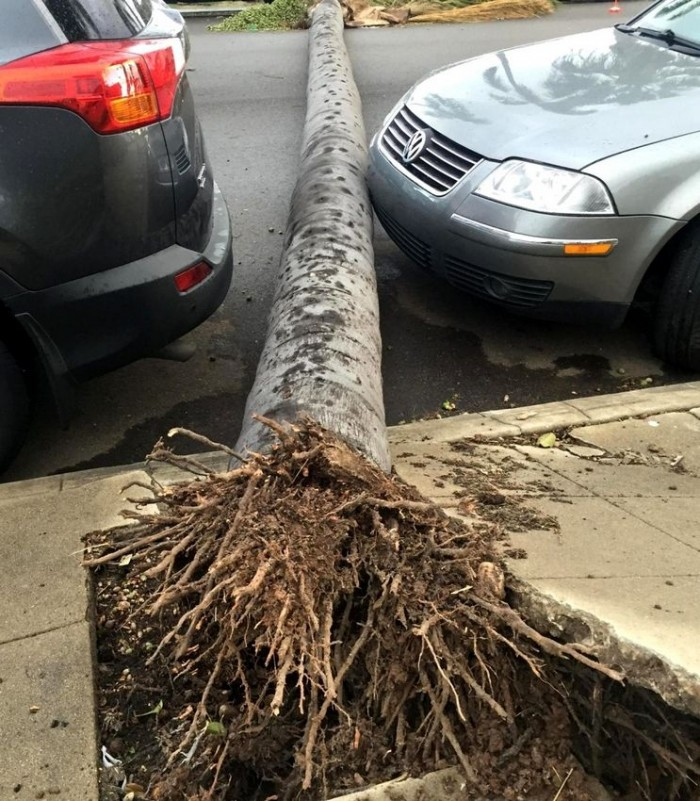 poorly rooted palm tree.jpg