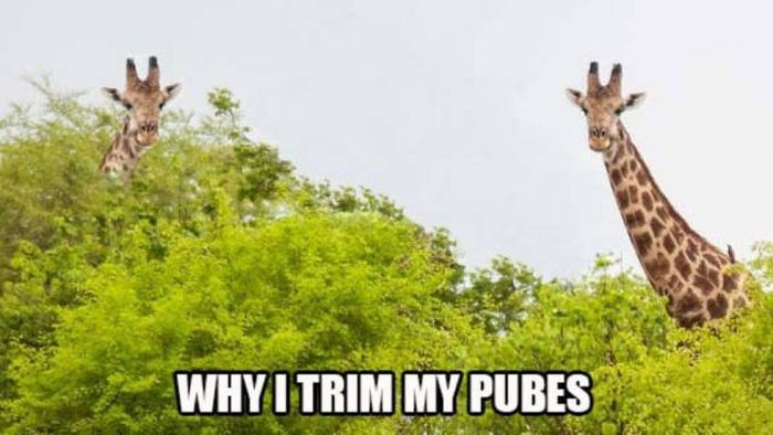 why I trim.jpg