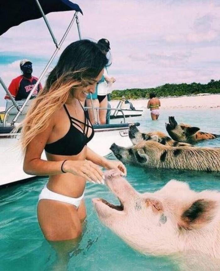 Beach Pigs.jpg