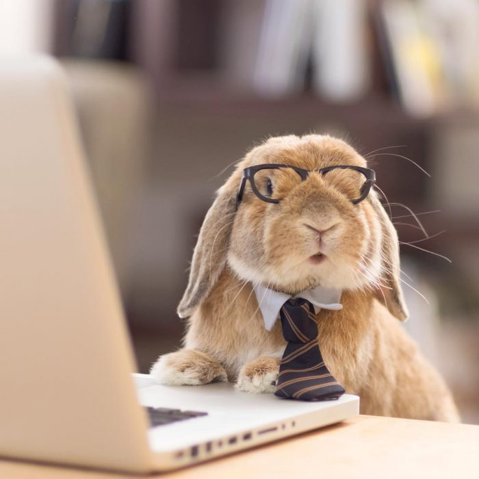 business bunny.jpg