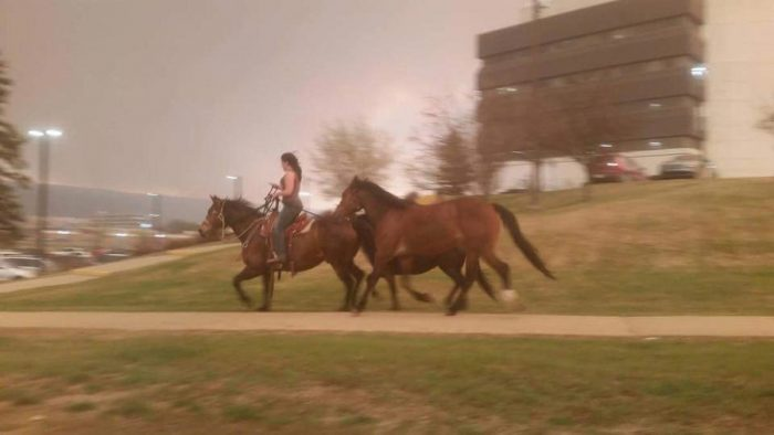 horses fleeing a fire.jpg