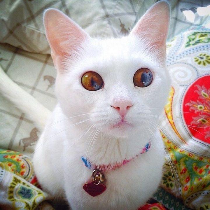 wide eyed kitty.jpg