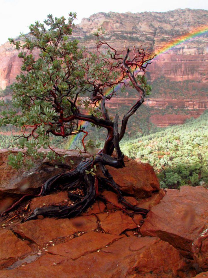 tree vacation-006-10102013
