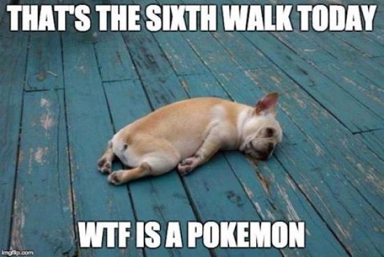wtf is a pokemon.jpg