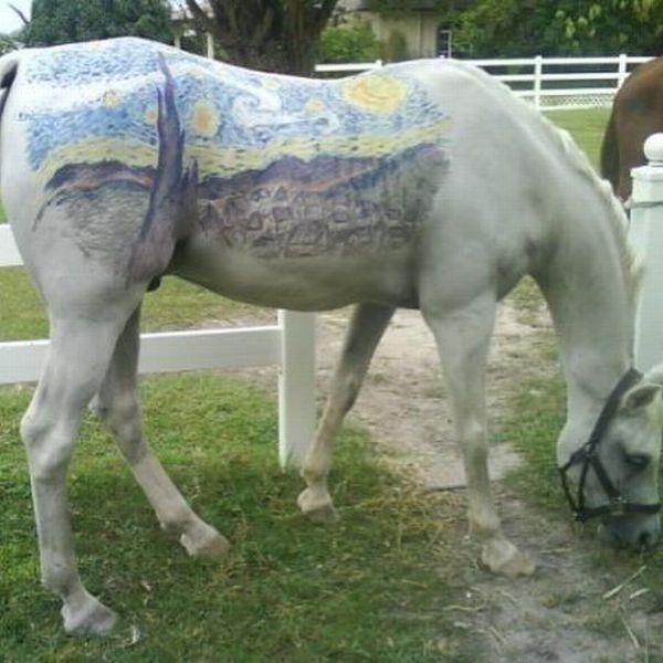 starry horse