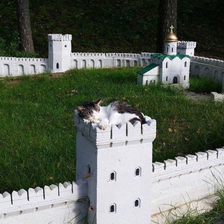 cat fortress.jpg