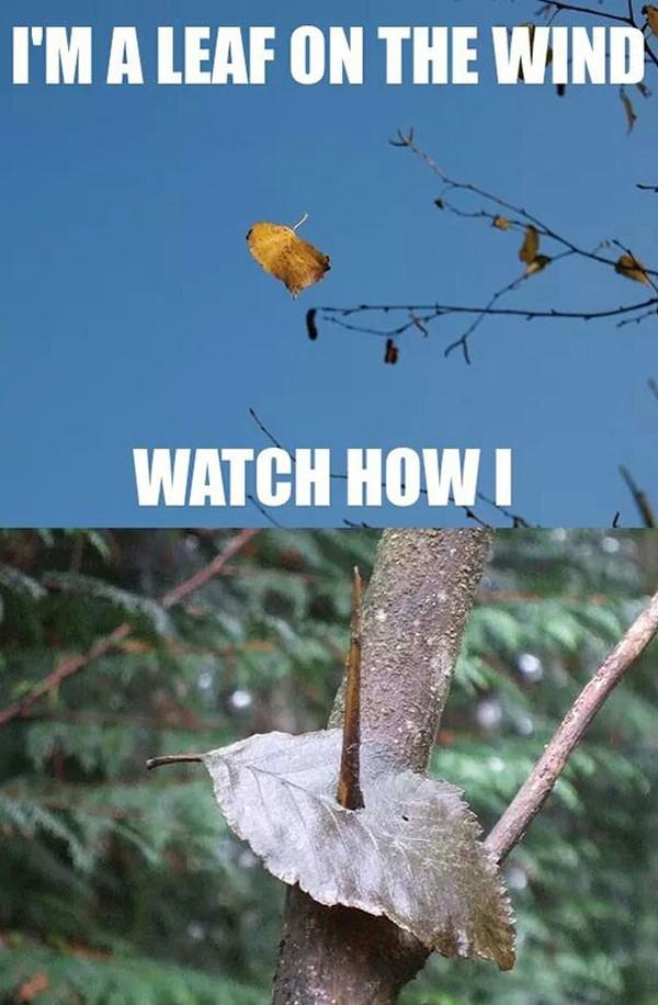 I'm a leaf on the wind.jpg