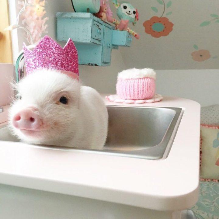 piglet in sink.jpg