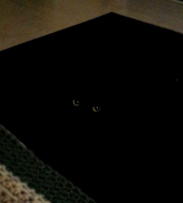 My Rug Has Eyes