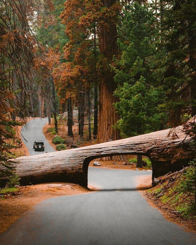 This tunnel at Sequoia National Park USA