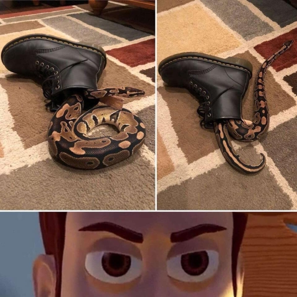 There's a snake in that boot