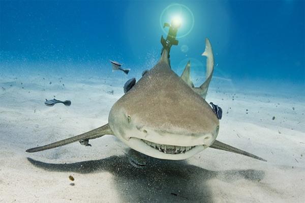 laser-shark-1.jpg (68 KB)
