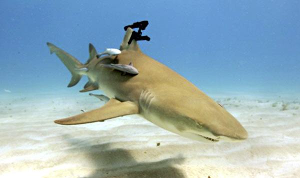 laser-shark-2.jpg (49 KB)