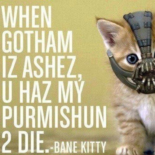 bane-kitty.jpg (61 KB)
