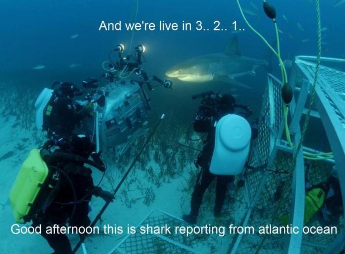shark-reporting.jpg (66 KB)