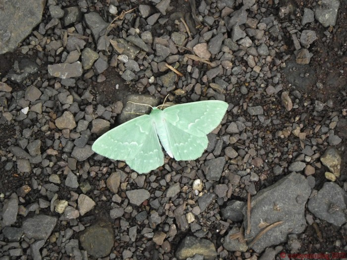 moth_maybe_butterfly.jpg (518 KB)