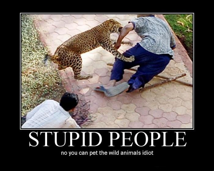 Stupid People lol Darwin animals