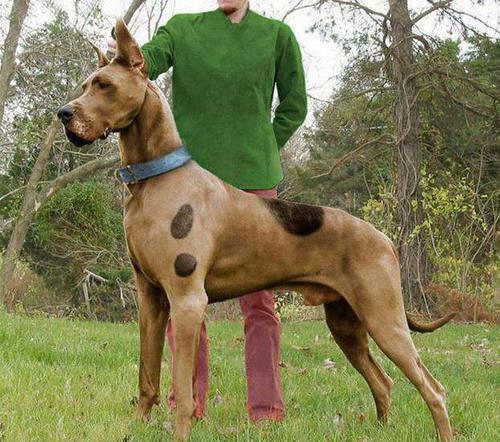 Scooby-doo-in-real-life.jpg (77 KB)