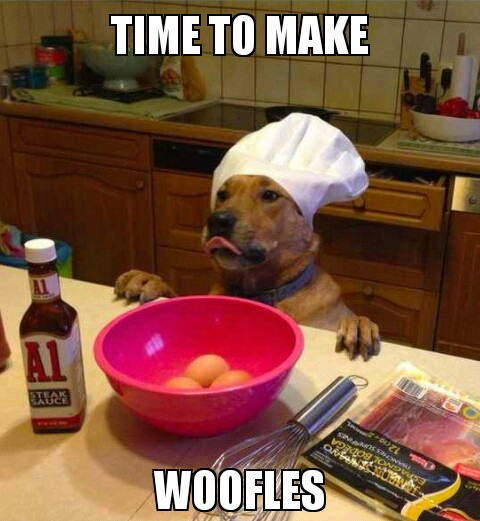 tumblr mfpr8uwGLa1rwe6rso1 500 Woofles funny Food dogs cooking animals