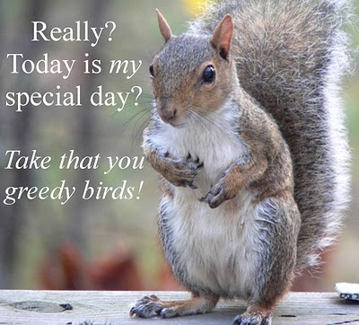 Funny squirrel appreciation day Squirrel Appreciation Day Jan 21 tree squirrels Squirrel Appreciation Day squirrel nuts mlk jr mlk fuzzy furry Day cute Appreciation adorable