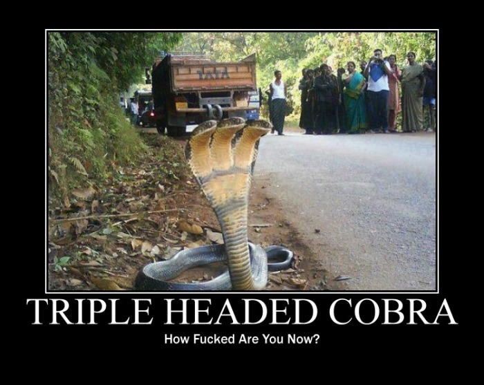 37162 Your New God Comes wtf Cobra 3 heads