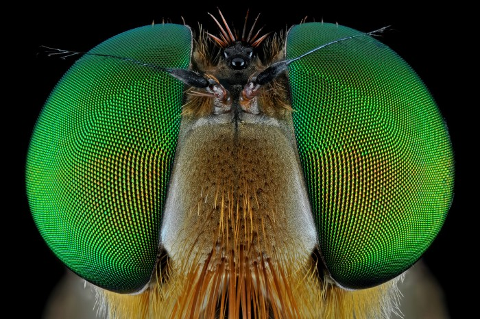 420353 detail 700x466 Our insect overlords Photography insects