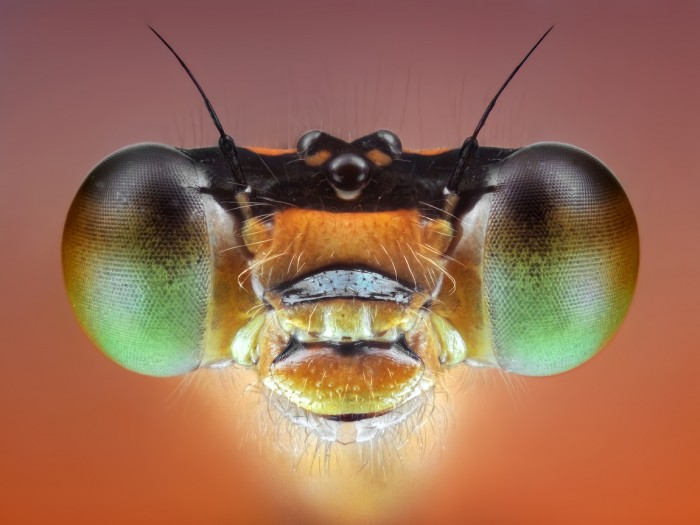 432156 detail 700x525 Our insect overlords Photography insects