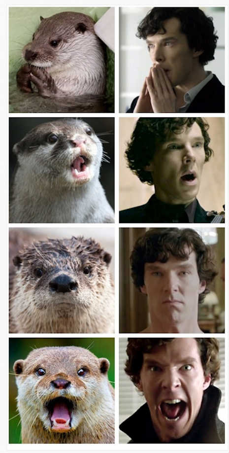 Otters-Who-Look-Like-Benedict-Cumberbatch.jpg (57 KB)