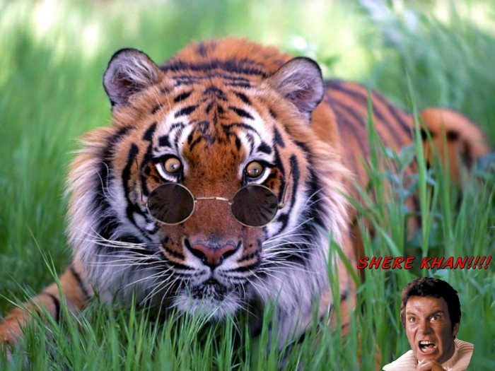 Jungle-book-meets-ST-say-what.jpg (1 MB)