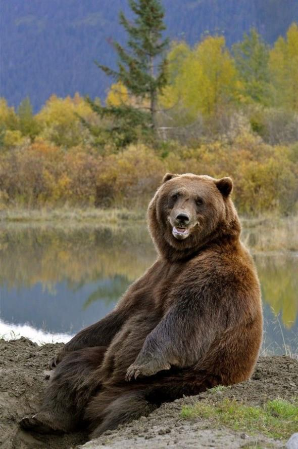 bear-403343_10150594076392912_1889763221_n.jpg (71 KB)