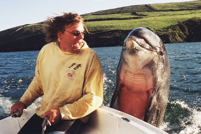 hi_dolphin.jpg (181 KB)