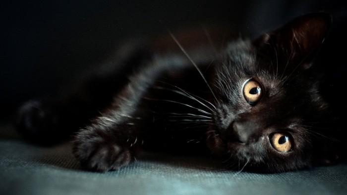 cats_hdr_photography_desktop_1920x1080_hd-wallpaper-1263679.jpg (425 KB)