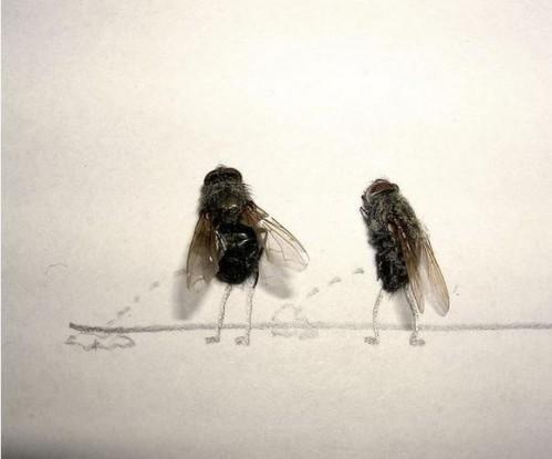 Flies1.jpg (24 KB)