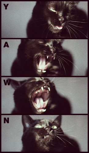 Yawn 290x500 The Yawn lolcats