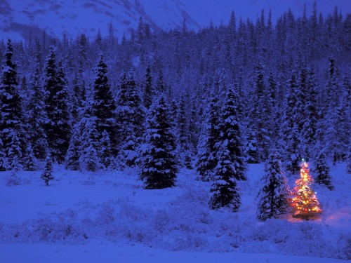 trees 8 500x375 Christmas Trees xmas X Mas Wallpaper