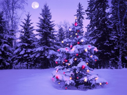 trees 500x375 Christmas Trees xmas X Mas Wallpaper
